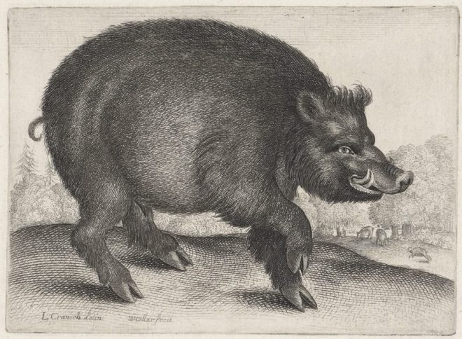 Wenceslaus Hollar. Wild Boar. Etching, 1644 - 1652. Rijksmuseum.