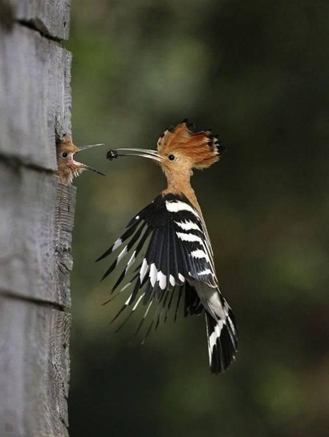 natureamazing.net · 15 hrs · Nice Capture, Motherhood